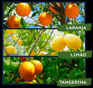 citros1